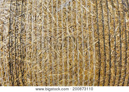 Close-up background stack of straw after the harvest of cereal crops. Round bales of straw on cut grain field. View of straw round bale background texture.