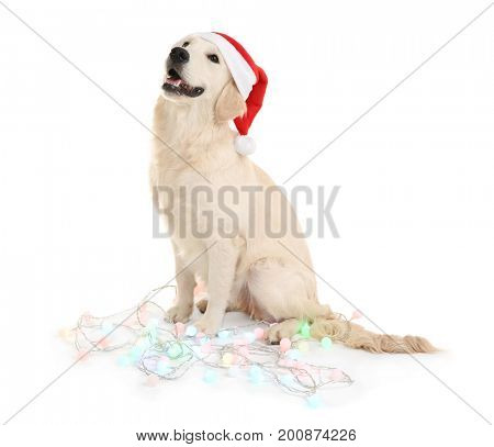 Cute dog in Santa hat sitting with Christmas lights on white background