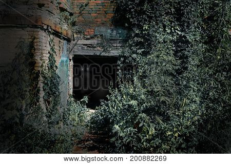 Old burnt house overgrown with plants in the moonlit night. Horror. Eyes in the dark.