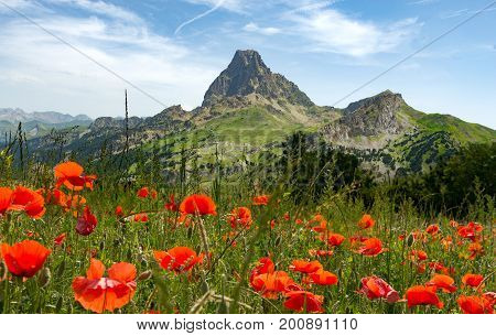View of the Pic du Midi d'Ossau in the French Pyrenees with field of poppies