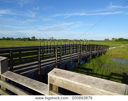 Pine Glades Natural Area In Florida Swamps