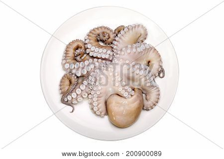 Octopus, Raw Octopus, Fresh Seafood On White Plate, Isolated On White Background With Work Path.