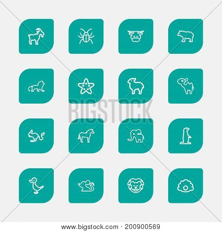 Set Of 16 Editable Animal Outline Icons. Includes Symbols Such As Dromedary, Zebra, Gopher And More