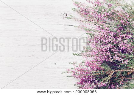 Pink heather flower border (calluna vulgaris erica ling) on white rustic table overhead view. Greeting card in vintage style.