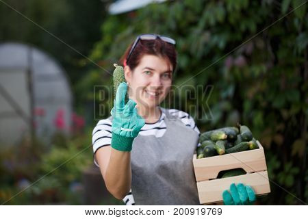 Portrait of young agronomist girl with crop of cucumbers in box on background of plant