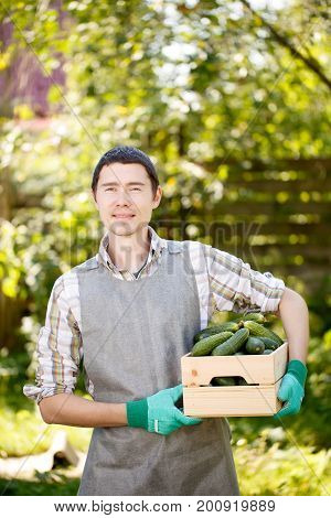 Photo of agronomist with box of cucumbers close-up