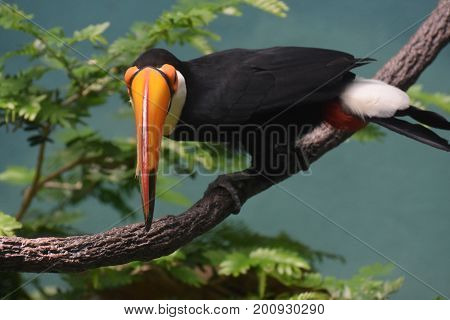 Looking down the orange bill of at toucan bird.