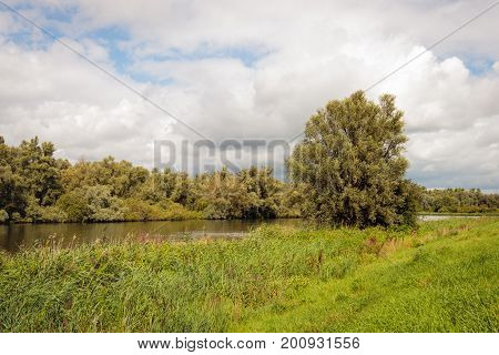 Dutch nature reserve with a creek between the reed plants and the trees. It's a summer day with a cloudy sky.