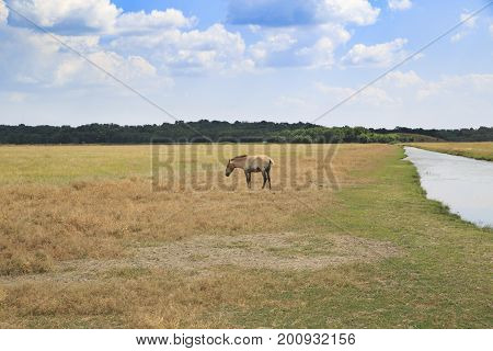 Lonely wild horse in the field with dry grass and a river beside