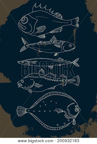 Set of sea fish. Perch cod mackerel flounder saura. Vector doodle. Elements for template. Illustration isolated and grouped for easy editing.