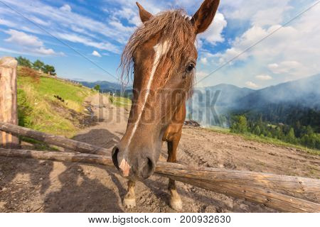 Horses, Feeding On Grass At High-land Carpathian Pasture