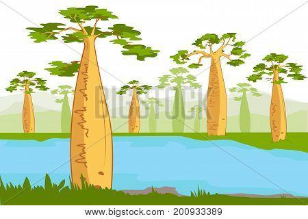 Baobabs nea the river. Beautiful Baobab tree silhouettes. Adansonia grandidieri. Madagascar flora. Vector landscape