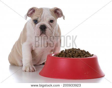 bulldog sitting beside a full bowl of kibble on white background