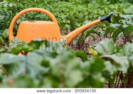 Watering can for irrigation is on a bed among fresh shoots of vegetables and fruits.