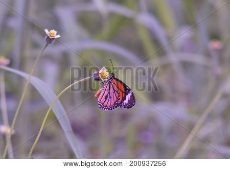 Beautiful nature scene with butterfly. Macro shot of butterfly on the flower. Butterfly in the nature habitat.