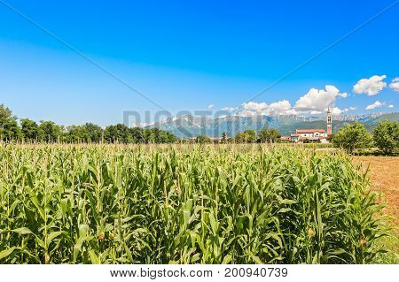 Field Of Corn, Mountains And Blue Sky With Clouds.