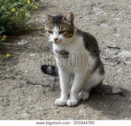 Cat. Homeless street cat. Interested cat. Yard cat