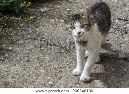 Cat. Homeless street cat. Interested cat. Curious cat