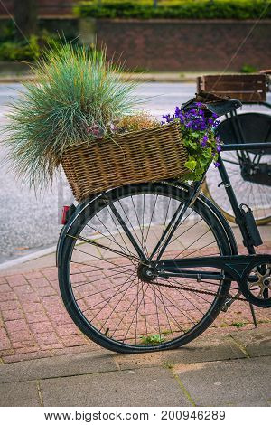 Vintage bycicle with basket and form green plants parked on the street.