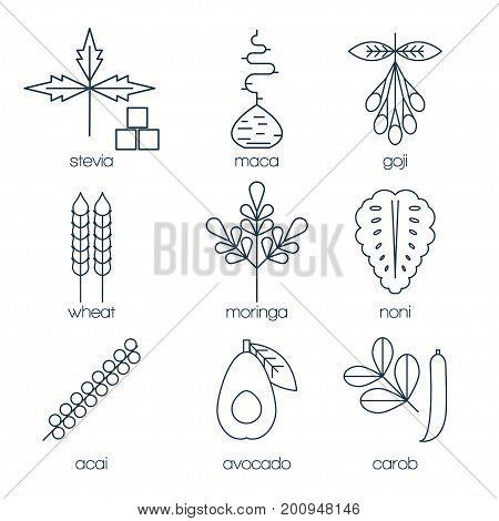 Superfood line icons set. Stevia, maca root, goji, wheat, moringa, noni, acai, avocado and carob. Vector illustration.