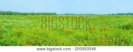 Ecosystem Of Freshwater Swamp Of Sri Lanka
