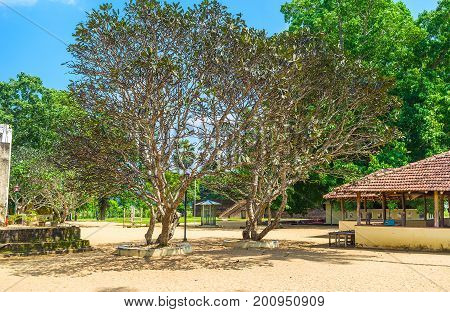 Bodhi Trees In Buddhist Shrine Courtyard