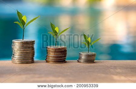 Plant Growing In Savings Coins. Money coin stack growing graph. Investment Concept