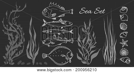 Set of white sea fish seaweed seashell on black background. Perch cod mackerel flounder saira. Vector doodle. Illustration isolated and grouped for easy editing.