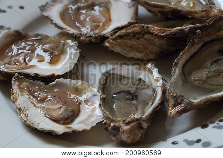 White and grey plate of open oysters for Christmas