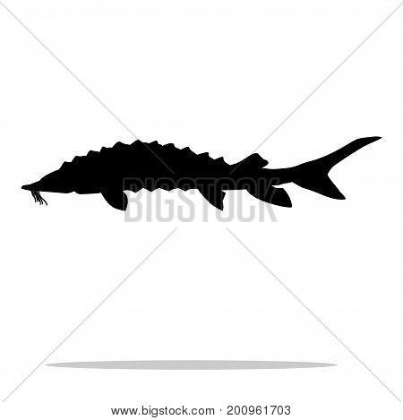 Sturgeon fish black silhouette aquatic animal. Vector Illustrator.