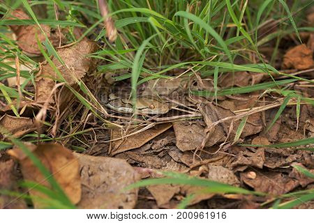 Boa Snake In The Grass, Boa Constrictor Snake On Tree Branch