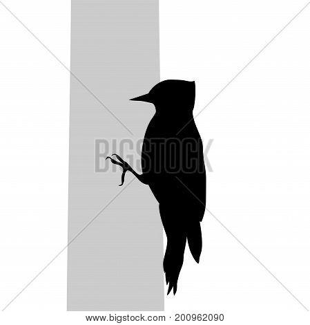 Woodpecker bird  black silhouette animal. Vector Illustrator.
