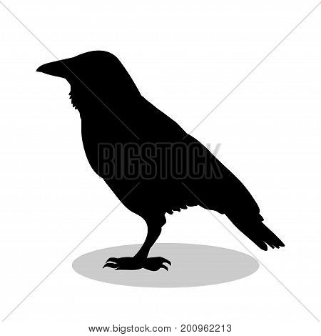 Raven bird  black silhouette animal. Vector Illustrator.