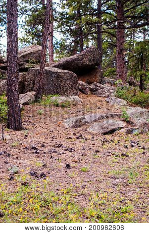 Rocky Mountain nationa forest aptly named with large boulders.