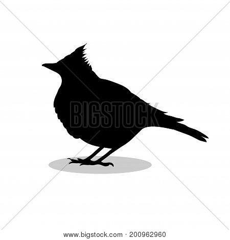 Skylark lark bird black silhouette animal. Vector Illustrator.