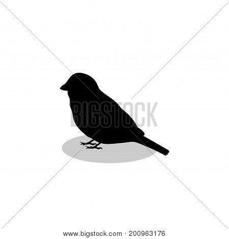 Sparrow bird black silhouette animal. Vector Illustrator.