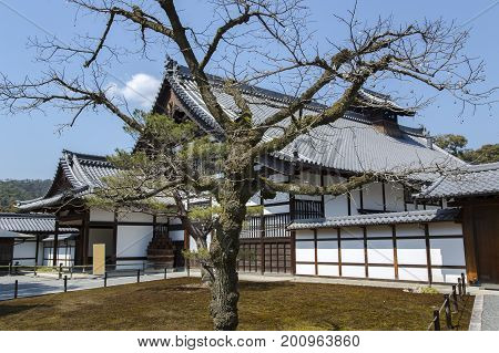 Traditional  Japanese architecture house with roof tile ornamentation with sakura tree in Kyoto, Japan.