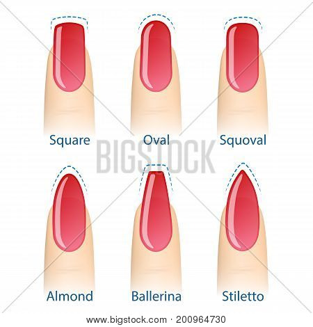 Nail manicure set of nails shapes - oval square almond stiletto ballerina squoval Vector