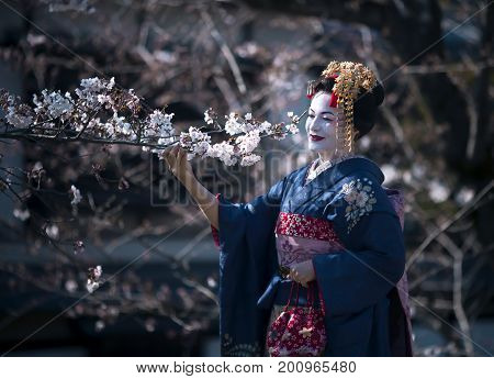 JAPAN, KYOTO, APRIL, 05, 2017 - Nice lady in the image of Maiko the apprentice Geisha, wearing beautiful kimono, gainst the background of cherry blossoms. Gion, Kyoto