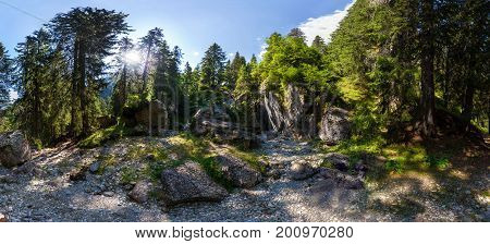 Panoramic view of a forest from Mount Bucegi on summer part of the Carpathian Range from Romania