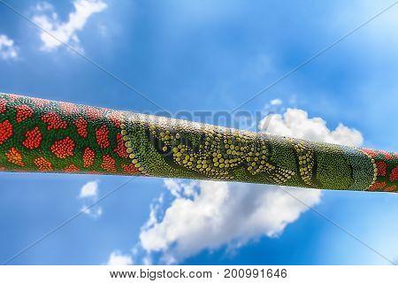 Didgeridoo - traditional aboriginal music instrument from Australia