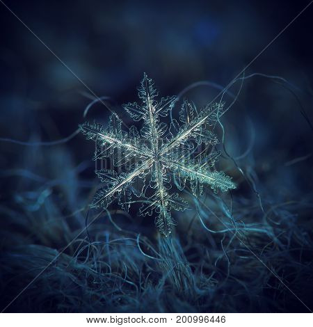 Real snowflake macro photo: large stellar dendrite snow crystal with complex, ornate shape, fine hexagonal symmetry and long, elegant arms with many transparent side branches.