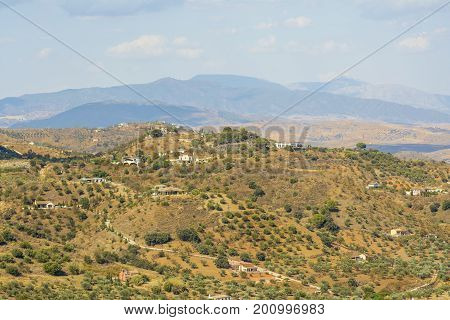 Olive groves on a hill with white houses on September 20 2016 in Malaga region Andalucia province Spain.