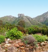 FROM CAPE TOWN, SOUTH AFRICA, THE KIRSTENBOSCH NATIONAL BOTANICAL GARDEN, NESTLED AT THE FOOT OF TABLE MOUNTAIN poster