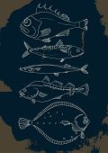 Set of sea fish. Perch cod mackerel flounder saura. Vector doodle. Elements for template. Illustration isolated and grouped for easy editing. poster
