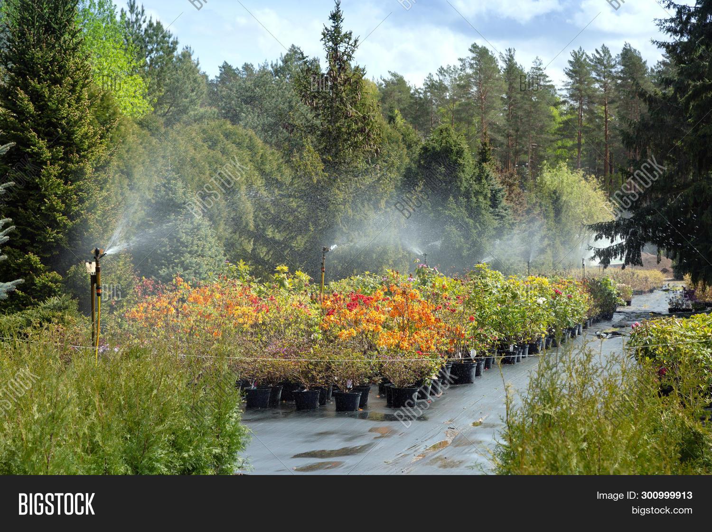 Water Sprinkler System Image Photo