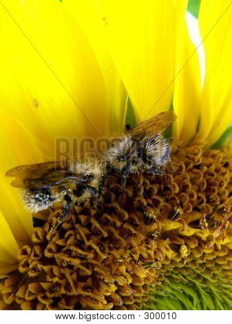 Bee Team Work