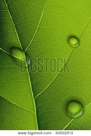 Water drops on green leaf. Vector background.
