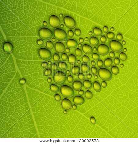 Heart shape dew drops on green leaf. Vector illustration, EPS10