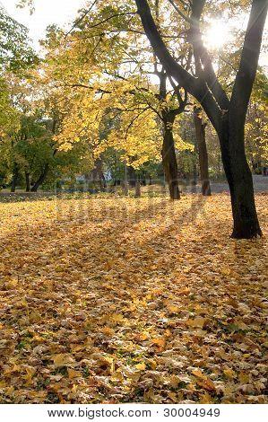 Autumn Foliage In The Park